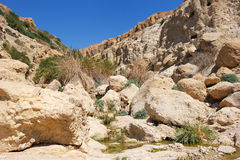 Ein Gedi Nature Reserve (Israel) Stock Images