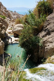 Ein Gedi Nature Reserve (Israel) Royalty Free Stock Photo
