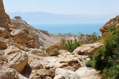 Ein Gedi Nature Reserve (Israel) Royalty Free Stock Photography