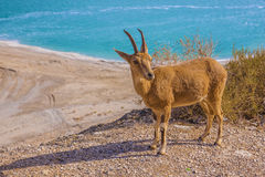 Ein Gedi nature reserve and national park royalty free stock photography