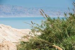 Ein Gedi, Nieżywy morze, Izrael Zdjęcie Royalty Free