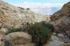 Ein Gedi oasis in Israel Royalty Free Stock Image