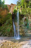 Ein Gedi Stock Photography