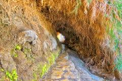 Ein Gedi park narodowy w Izrael Obrazy Royalty Free