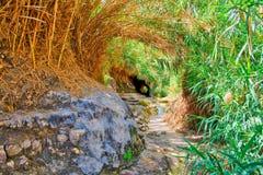 Ein Gedi park narodowy w Izrael Obraz Royalty Free