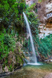 Ein-Gedi - the reserve and national park of Israel Royalty Free Stock Photography