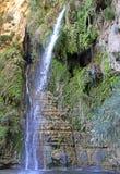 Ein Gedi - rezerwat przyrody i park narodowy Fotografia Stock