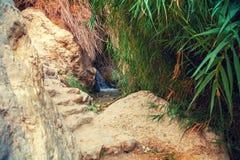 ein gedi rezerwat przyrody Izrael zdjęcia stock