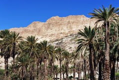 Ein Gedi Spring Royalty Free Stock Photos