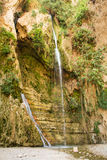 Ein Gedi spring, Israel. Royalty Free Stock Photo