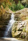 Ein Gedi spring, Israel. Stock Image