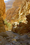 Ein Gedi Royalty Free Stock Photos