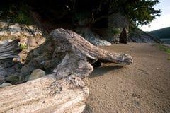 Ein gefällter Baum wird oben ein gewaschen Lizenzfreies Stockfoto