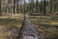 Ein gefallener Baum Stockfotografie