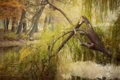 Ein gefallener Baum lizenzfreie stockbilder