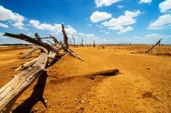Ein gefallener Baum in einer Wüste stockfotografie