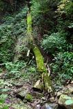 Ein gefallener Baumstamm überwältigt mit Moos in den Bergen Stockfotos