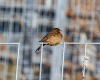 Ein gefrorener gewordener Vogel lizenzfreie stockfotografie