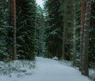Ein gefrorener Weg im Wald lizenzfreie stockfotografie