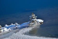 Ein gefrorener Weihnachtsbaum Lizenzfreies Stockfoto