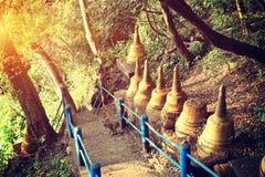 Ein gehender Wanderweg des Affen auf Berg Stockbilder
