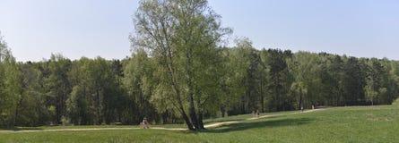 Ein Gehweg in einem Frühlingspark Stockbilder