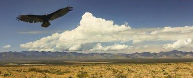 Ein Geier und ein Blitz, Chiricahua-Berge, Arizona Lizenzfreies Stockfoto