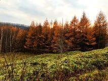Ein gelber Herbstwald an der Straßenseite Lizenzfreie Stockfotografie