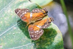 Ein gelber Schmetterling auf grünem Blatt Stockfotografie