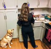 Ein gelbes Labor, das ihren Inhaber um Nahrung in der Küche während des Abendessens bittet Sie sitzt nach rechts neben der Frau u stockbilder