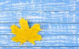Ein gelbes trockenes Blatt auf einem blauen Hintergrund Stockfoto