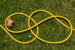 Ein gelbes waterhose, das auf den Rasen legt Stockbilder