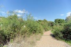 Ein gepflasterter Weg unter grünen Büschen Stockbilder
