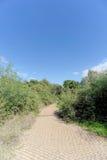 Ein gepflasterter Weg unter grünen Büschen Lizenzfreie Stockbilder