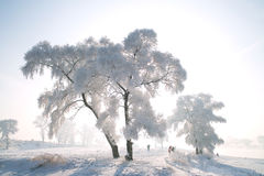 Ein gereimter Baum Stockbilder