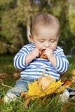 Ein geschmackvoller Herbst Lizenzfreies Stockbild