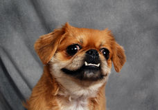 Ein Gesicht zum zu lieben Stockfoto