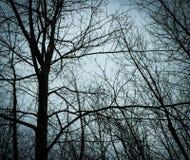 Ein gespenstischer Weg im Wald stockfotos