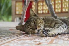 Ein gestreiftes Katzenschlafen lizenzfreie stockbilder