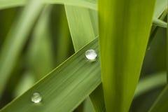 Ein gesunder Sommerfrische balancewater Tropfen auf grünem leafï ¼ Œzen Stockbilder