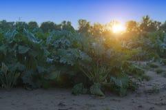 Ein Getreide - ein Abschluss oben Stockfotos