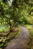 Ein getretener Weg in einem Stadtpark lizenzfreie stockfotos