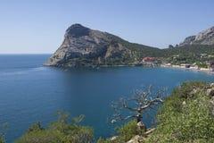 Ein getrocknetes Kiefernrelikt auf dem Hintergrund des Meeres Lizenzfreie Stockbilder