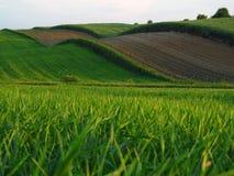 Ein gewelltes Feld Stockbild