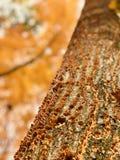 Ein glänzendes orange Wachstum von orange Pilzen in Cleveland MetroParks - dem PARMA - dem OHIO lizenzfreie stockbilder