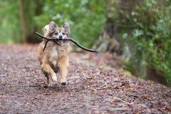 Ein glücklicher Hund Stockfoto