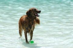 Ein glückliches, Schwimmenhund am 2014 Jahrbuch Madison Dog Paddle (Goodman-Pool) Stockfotografie