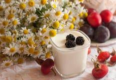 Ein Glas Jogurt, ein Blumenstrauß der Kamille und eine Platte von reifen Pflaumen auf einer hellen Spitzeoberfläche verziert mit  Stockbilder