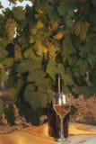 Ein Glas und Flasche des Weißweins im Herbstweinberg Lizenzfreie Stockfotos