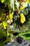 Ein Glas weißer Wein Eine Flasche Wein Vinnic Reifer Traubenwein Dunkelrote Trauben Weinberg In den Flanken gibt es einen Kognak lizenzfreie stockbilder
